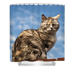 Cat On A Hot Brick Wall Shower Curtain by Steve Purnell