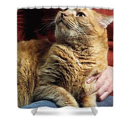 Cat On Lap Shower Curtain by James L. Amos