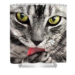 Shower Curtain featuring the photograph Cat by Paul Fearn