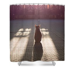 Cat Sitting Near Window Shower Curtain by Matteo Colombo