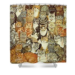 Cat Spread Shower Curtain