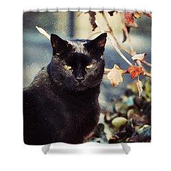 Cat Stevens Shower Curtain by Trish Tritz