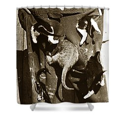 Shower Curtain featuring the photograph Cat Tails By Henry King Nourse Circa 1900 Historical Photos by California Views Mr Pat Hathaway Archives