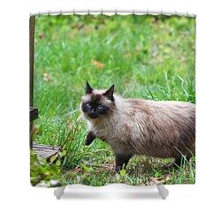 Cat Walking Shower Curtain