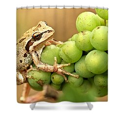 Catching A Ride On The Pinot Shower Curtain by Jean Noren