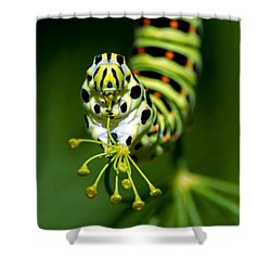 Caterpillar Of The Old World Swallowtail Shower Curtain by Torbjorn Swenelius