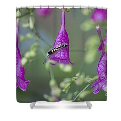Caterpillar Playground  Shower Curtain