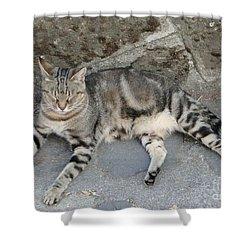 Catouflage Shower Curtain by Barbie Corbett-Newmin