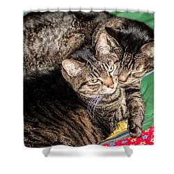 Cats Cuddling Shower Curtain by Sue Smith