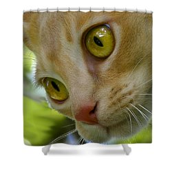 Cats Eyes Shower Curtain