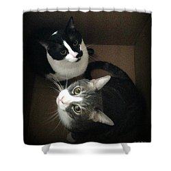 Cats In The Box Shower Curtain