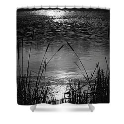 Cattails 3 Shower Curtain by Susan  McMenamin