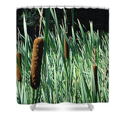 Cattails A Plenty Shower Curtain by Michael Porchik