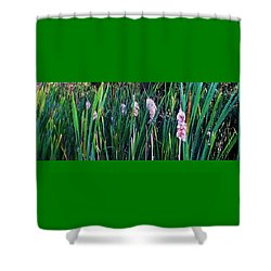 Shower Curtain featuring the photograph Cattails by Daniel Thompson