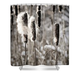 Cattails In Winter Shower Curtain by Elena Elisseeva