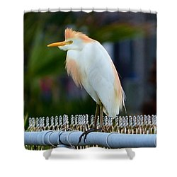 Cattle Egret Breeding Plumage Shower Curtain by Debra Martz