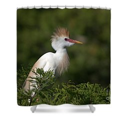 Cattle Egret No. 5 Shower Curtain