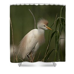 Cattle Egret Shower Curtain