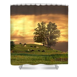 Cattle On A Hill Shower Curtain