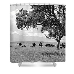 Cattle Ranch In Summer Shower Curtain by Clarice  Lakota
