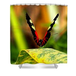 Shower Curtain featuring the photograph Cattleheart Butterfly  by Amy McDaniel