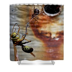 #caught Shower Curtain by Becky Furgason