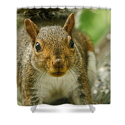 Caught In The Act Shower Curtain by Lois Bryan