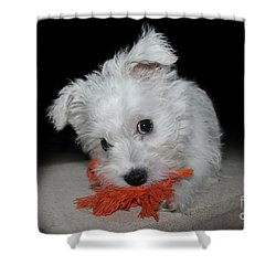 Caught In The Act Shower Curtain by Terri Waters