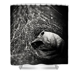 Caught In Your Web Shower Curtain by Rebecca Sherman