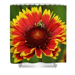 Caught Snacking Shower Curtain by Kevin Fortier