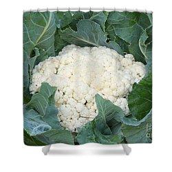 Cauliflower Shower Curtain by Carol Groenen