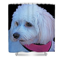 Cavachon Shower Curtain