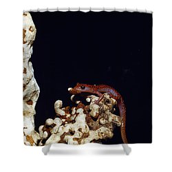 Cave Salamander Shower Curtain