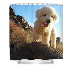 Ceaser Shower Curtain
