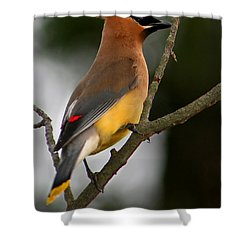 Cedar Wax Wing II Shower Curtain by Roger Becker