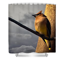 Cedar Waxwing Shower Curtain by Bob Orsillo
