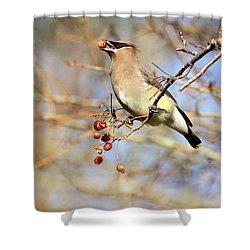 Cedar Waxwing Eating A Cherry Shower Curtain