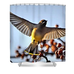 Cedar Waxwing Flight Shower Curtain