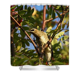 Shower Curtain featuring the photograph Cedar Waxwing by James Peterson