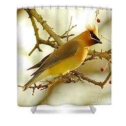 Cedar Waxwing Shower Curtain by Robert Frederick