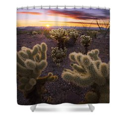 Celebration Shower Curtain by Peter Coskun
