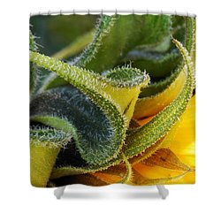 Shower Curtain featuring the photograph Celebration Sunflower by Wendy Wilton