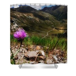 Centaurea Shower Curtain