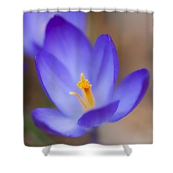 Center Of Attention Shower Curtain by Jean-Pierre Ducondi