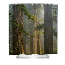 Center Of Forest Shower Curtain