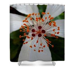 Center Shower Curtain by Pamela Walton
