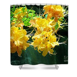 Centered Shower Curtain by Roberta Byram