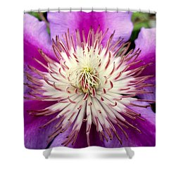 Centerpiece Shower Curtain
