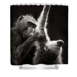 Chacma Baboons Grooming Shower Curtain by Johan Swanepoel