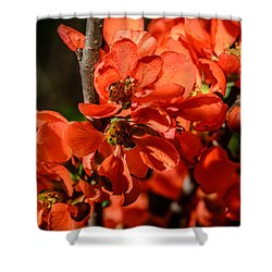 Chaenomeles Shower Curtain by Michael Goyberg